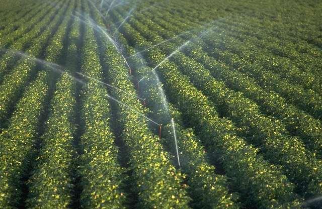 TurfManzi Irrigation - Irrigation & Soil Productivity